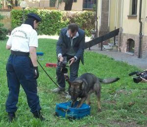 Uno dei due cani antidroga in forza ai Vigili urbani