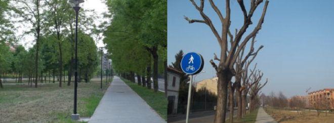 A sinistra gli alberi in via Emilia nord 6 mesi fa, a destra gli stessi alberi oggi
