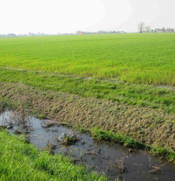 campi in cui è stato sparso il digestato