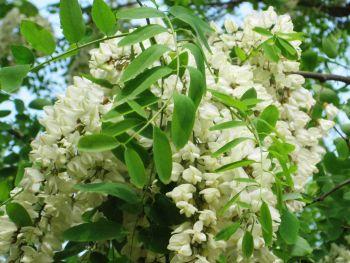 Ad Avolasca sabato inizia una serie di incontri per consocere le piante spontanee