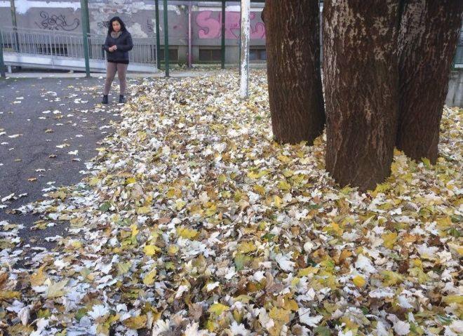foglie 10