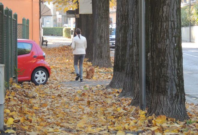 foglie 11