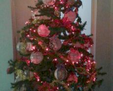 Chiude la cardiologia di Tortona, la caposala ringrazia tutti con un albero di Natale coi nomi