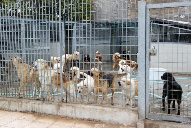 Tortona rinnova la gestione del canile,  basterà ad assicurare il servizio o pagheranno i cittadini?