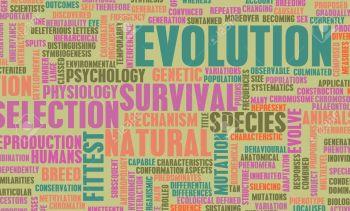 evoluzione - Q
