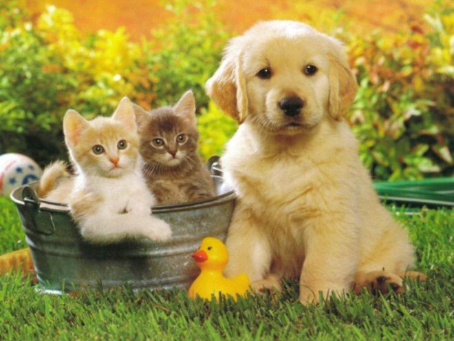 Nominati dal Comune di Tortona il Garante degli animali e il consigliere Asmt