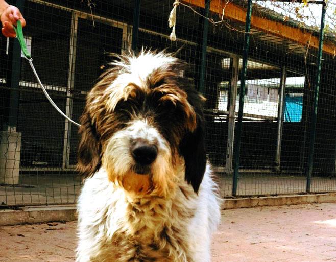 Tortona, nuova gestione del canile per 2,6 euro a cane, non sono pochi?