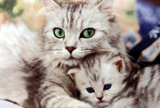 Il Comune di Alessandria dà il via alla sterilizzazione dei gatti