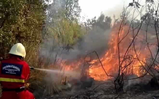 In Liguria ci sono pochi Vigili del Fuoco per spegnere gli incendi boschivi. L'allarme della Regione
