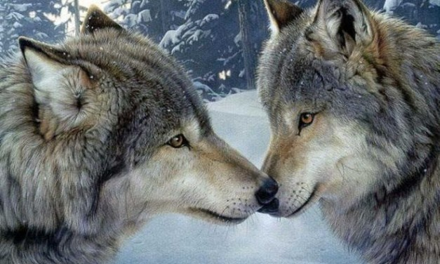Venerdì a Boscomarengo si parla del lupo