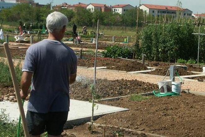 Ad Alessandria c'é un bando per assegnare orti agli anziani