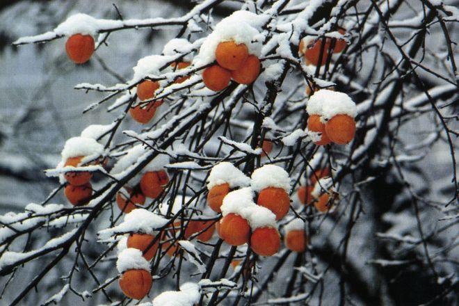Prima neve in pianura. Permane l'allerta gialla per nevicate