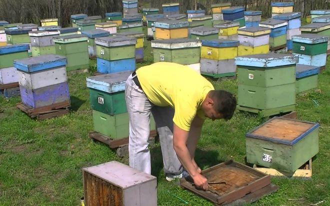 Mercoledì a Novi apre il primo Museo dell'apicoltura in Piemonte