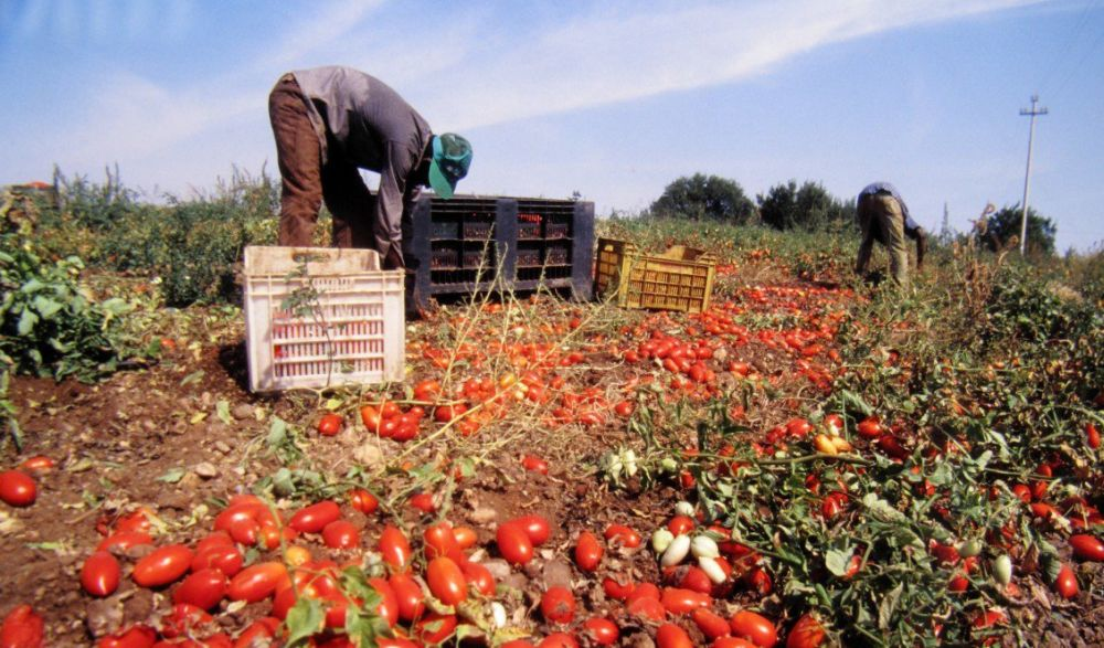 Lotta al caporalato: Confagricoltura Piemonte sottoscrive il Protocollo di intesa per la promozione del lavoro regolare