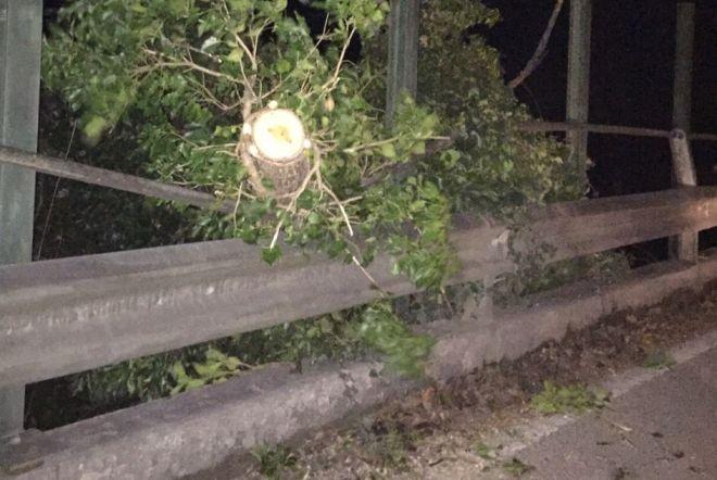 Tortona, vento e pioggia nella notte, piante pericolanti a Torregarofoli