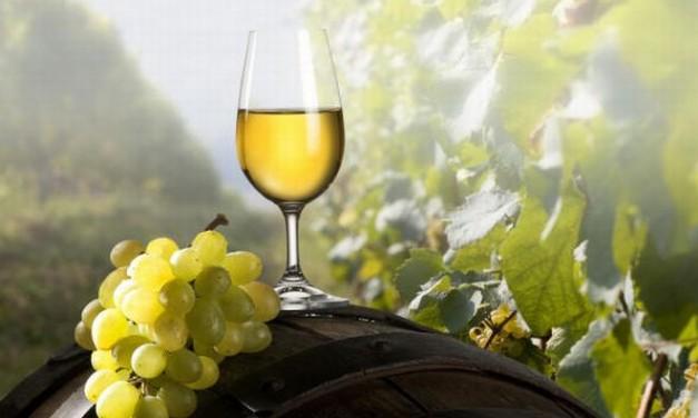 Venerdì al via a Casale la Festa del vino del Monferrato. Tutto il, programma