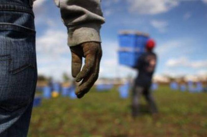 """Castelnuovo Scrivia, cinque marocchini """"caporali"""" reclutavano connazionali per lavorare in nero nei campi"""