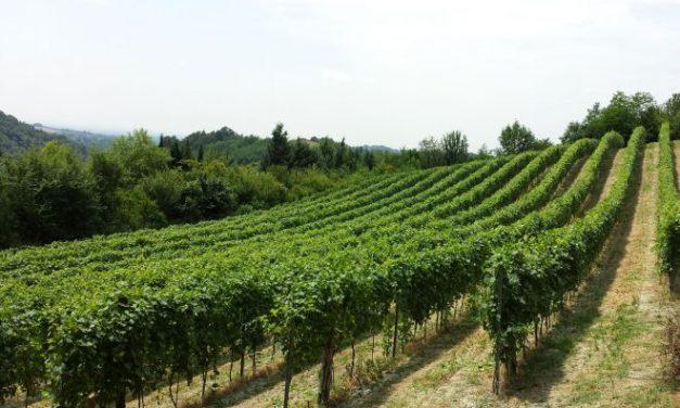 Vino, gastronomia, cultura… La 57a Festa del Vino del Monferrato