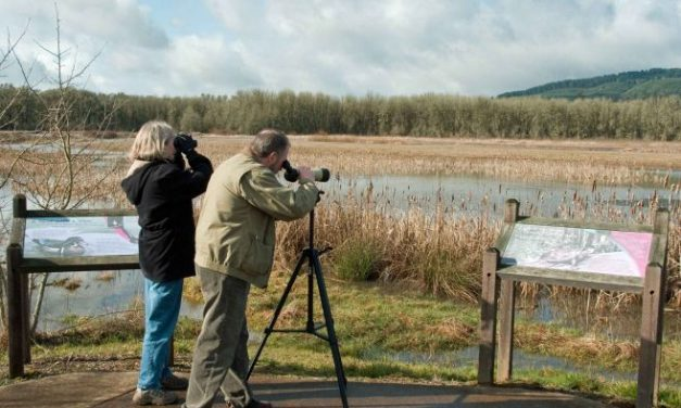 "Domenica ad Isola Sant'Antonio si fa  ""Birdwatching in Oasi"""