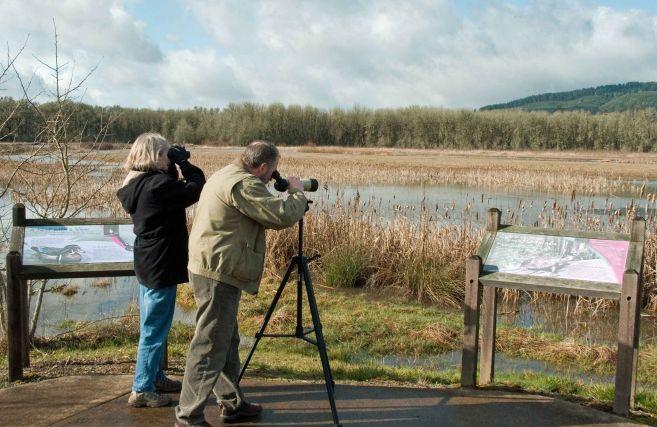 Domenica si fa birdwatching all'area naturalistica di Isola Sant'Antonio, come partecipare