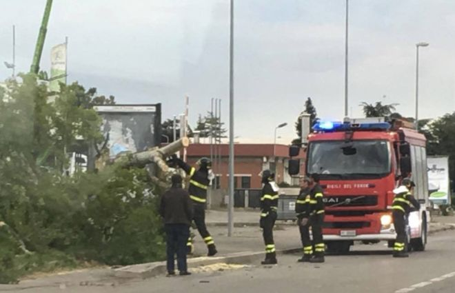 Al Bowling di Tortona il vento danneggia un grosso albero, i pompieri costretti a tagliarlo