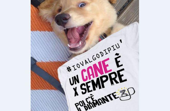 A Voghera una campagna contro l'abbandono dei cani