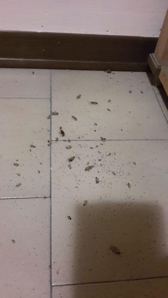 scarafaggi I