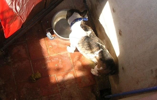 Una donna dell'Uruguay lascia un cane al buio senza acqua e cibo per 28 ore, denunciata