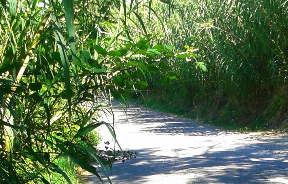 Le strade alla periferia di Tortona piene di erba e quasi impraticabili. Le immagini