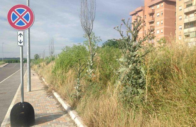 Problemi sulla manutenzione del verde ad Alessandria?