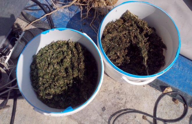 Cassine, coltiva droga in terrazzo, arrestato dalla Finanza