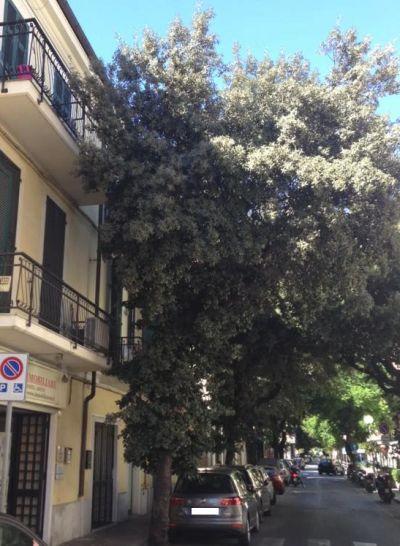 alberi-diano-2