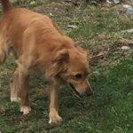 Diano Marina, il cane scappa di casa, ritrovato grazie a una foto su Facebook