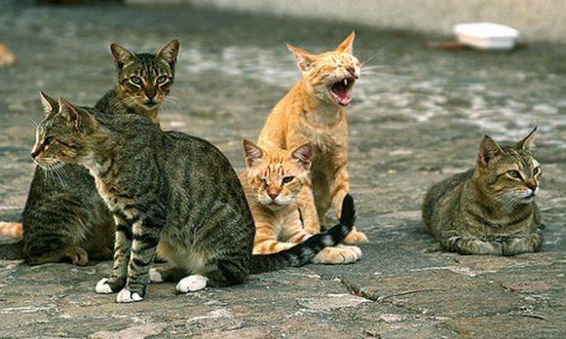 Ad Alessandria ci sono 1.710 gatti in ben 181 colonie feline. Tanti? Troppi? Nel dubbio facciamo loro la festa