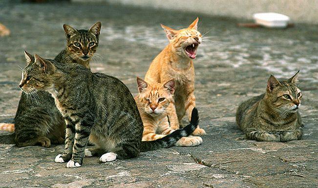 A Diano Marina ci sono ben 7 colonie feline, ma adesso il Comune cerca 3 mila euro per sterilizzare 50 gatti