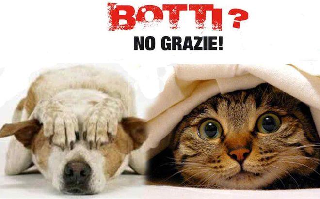 Gli animalisti di Alessandria arrabbiati perché il Comune non ha fatto rispettare il divieto dei fuochi artificiali