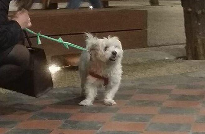 Un cane ritrovato a Diano Marina in via Milano
