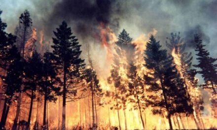 Dopo gli incendi di Cervo e nel Ponente la Regione Liguria lancia lo stato di grave pericolosità: vietato accendere fuochi di qualsiasi tipo