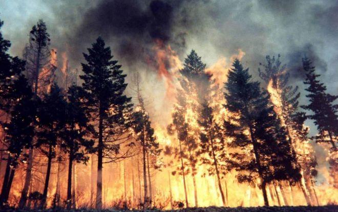 Comincia a fare caldo, scatta il pericolo incendi, non accendete fuochi, non gettate mozziconi, fate attenzione!