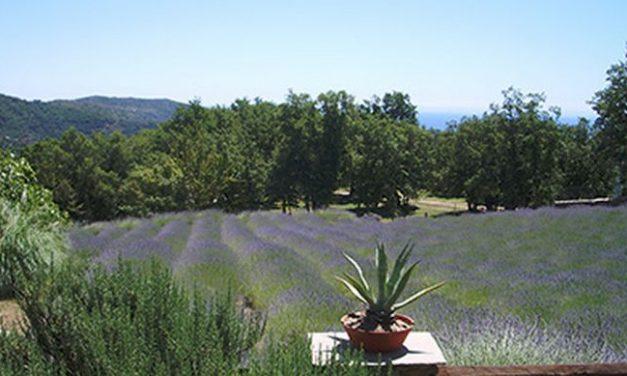 Il Territorio della Lavanda della Riviera dei Fiori parteciperà alla Magnalonga di Alassio del 7 maggio con i suoi prodotti gastronomici