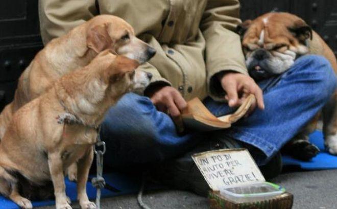 Ad Alessandria veterinario gratis per famiglie in difficoltà economiche, gesto di grande sensibilità