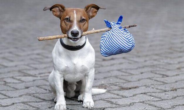 Diano Castello dà il via alla sterilizzazione dei cani e dei gatti randagi