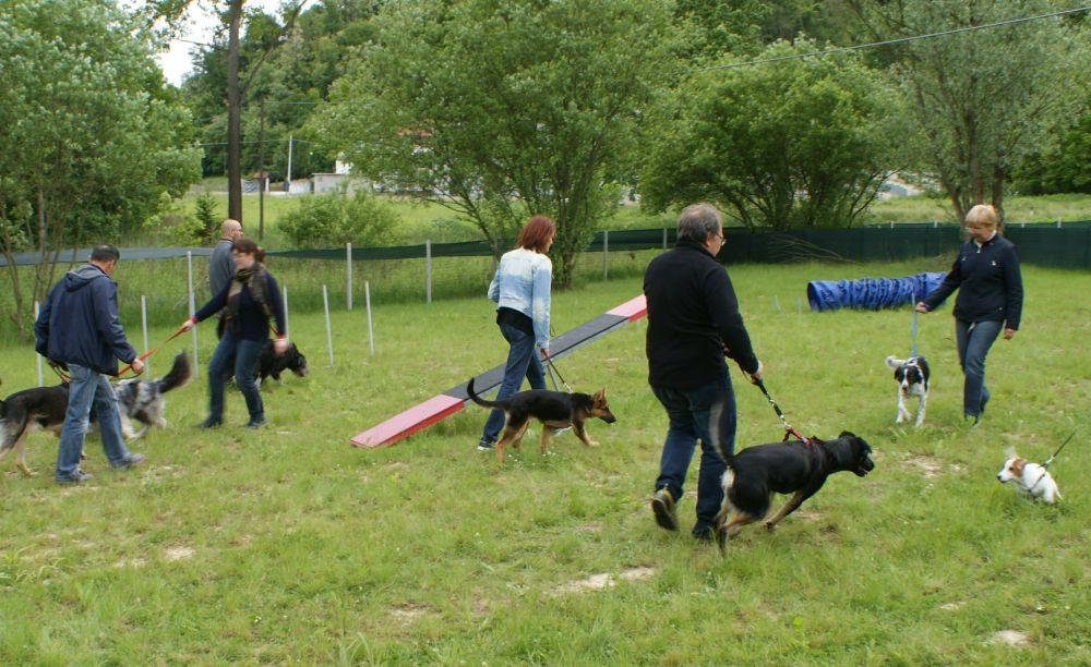 Domenica ad Alessandria si inaugura una nuova area per i cani