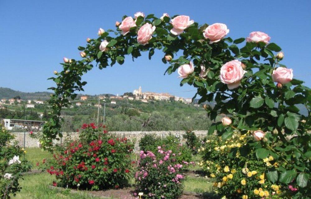 Al roseto Patrucco di Diano Castello 300 varietà di fiori e uno spettacolo da non perdere: visitarlo non costa nulla
