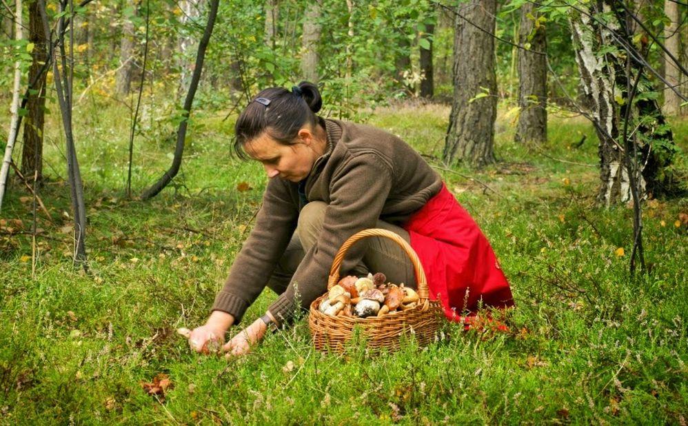 A Imperia un corso per riconoscere funghi ed erbe spontanee commestibili