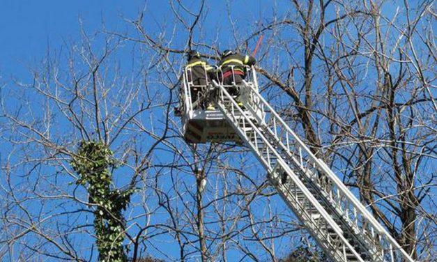 Viguzzolo, i cani spingono un gatto sopra l'albero e lo presidiano per tutto il giorno, salvato dai Vigili del Fuoco