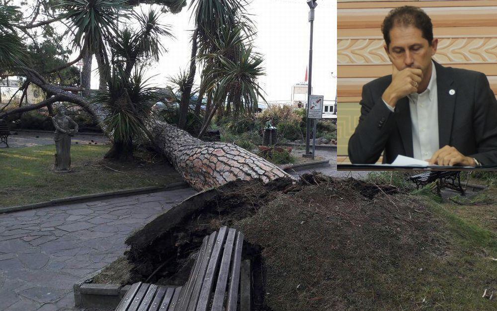 """Za Garibaldi: """"L'albero caduto a Diano marina era sorvegliato speciale e ce ne solo altri che controlliamo, ma questo era storto."""""""