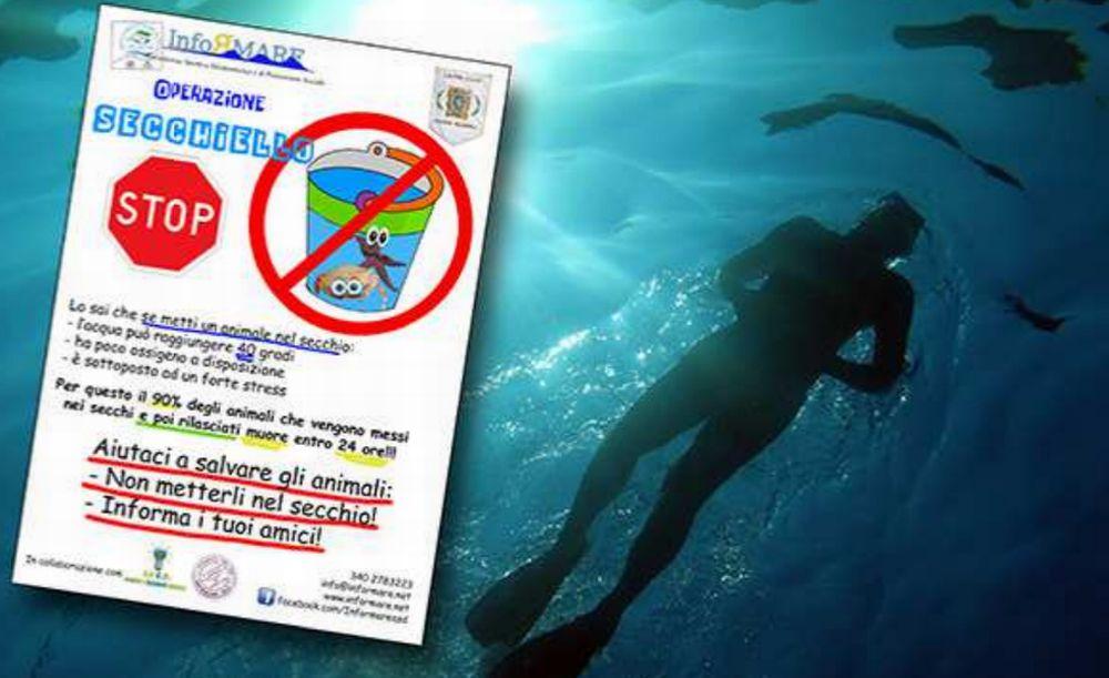 Giovedì i bambini delle scuole di Diano marina si danno appuntamento al Molo delle tartarughe per capire il mare