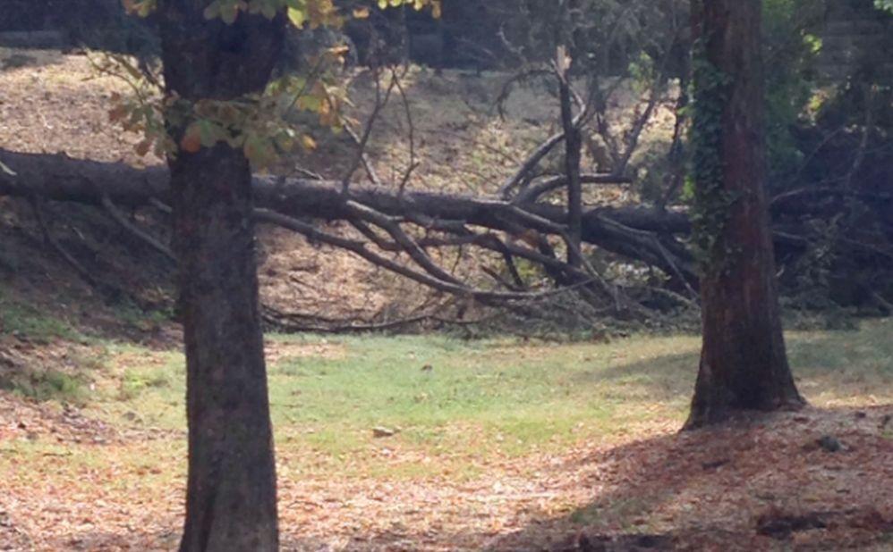 Il temporale a Tortona ha flagellato il Castello e l'area Silvi facendo cadere molti alberi./Le immagini