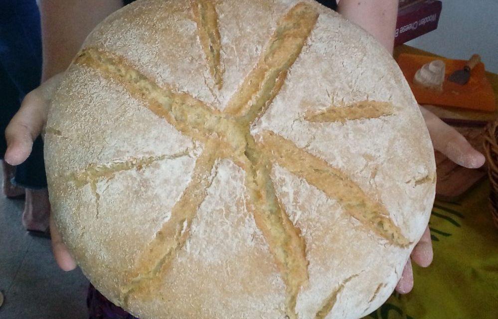 A Tortona si venderà per la prima volta il pane realizzato col il grano pastore.